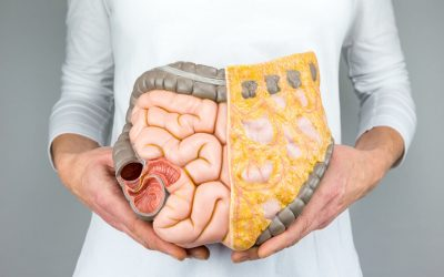 What is the root cause of BELLY FAT?